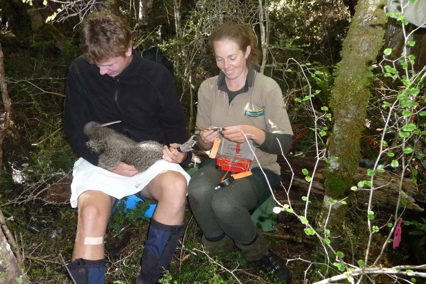 Auszeit Neuseeland Freiwilligenprojekt
