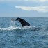 Study_Nelson_Whales (2)