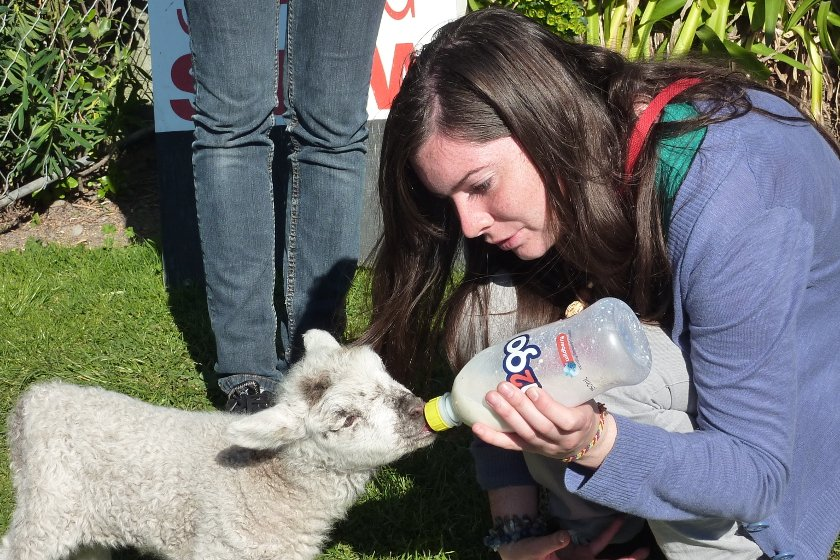 Auszeit Neuseeland Farmstay
