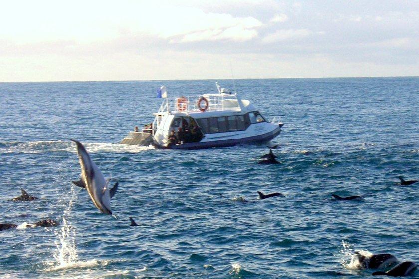 Auszeit Neuseeland Delfinschwimmen