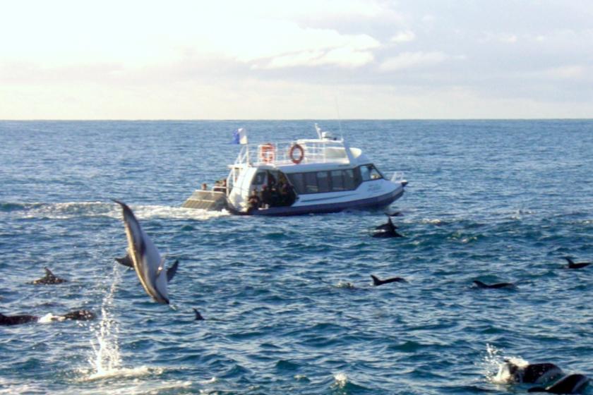 Auszeit Neuseeland Dolphin Swimming