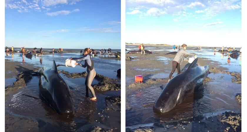 Auszeit Neuseeland Walrettung
